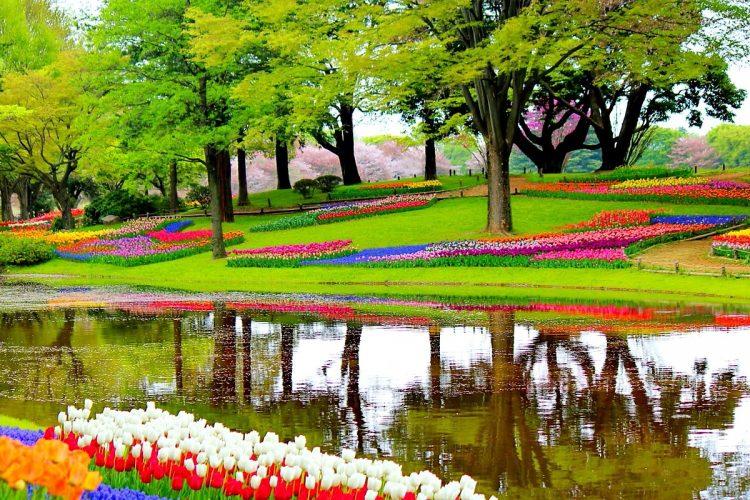 jardines_tulipanes_keukenhof_ok1