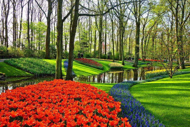 jardines_tulipanes_keukenhof_ok2