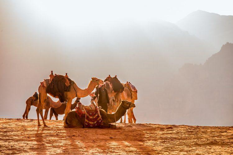 paseo_camello_marrakech_ok2