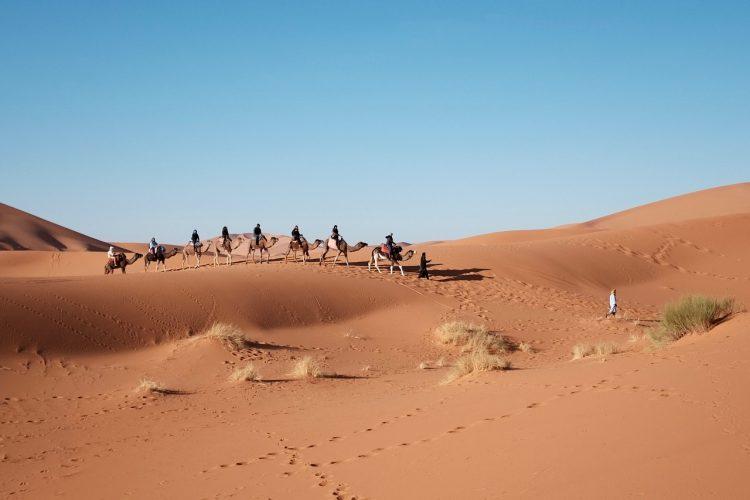 paseo_camello_marrakech_ok4