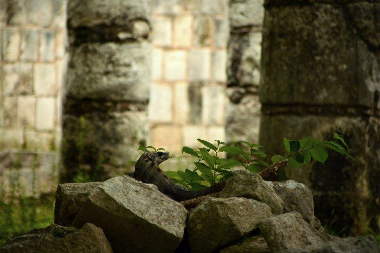 chichen_itza_valladolid_cenote_sagrado_ok4