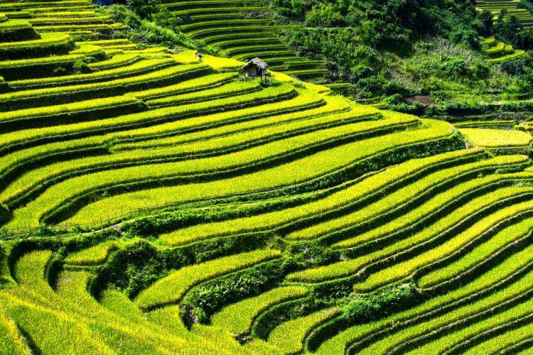 Sapa desde Hanoi 4